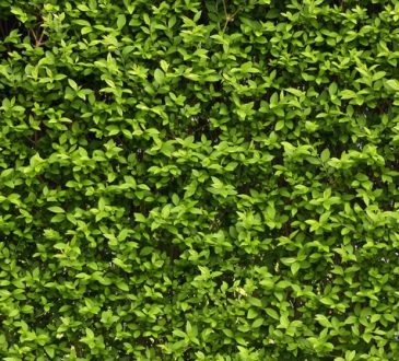 I Green Walls o muri verdi: benefici, salute, design e verde urbano