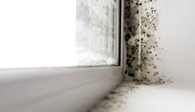 Vuoi scoprire come togliere la muffa dai muri di casa?