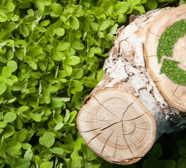 Convegno Fiper/ Polito sviluppo settore biomasse